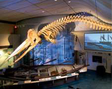 Cape Cod attractions Nantucket Whaling Museum