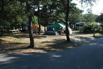 Cape Cod Campground - North Truro camping area