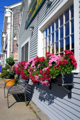 Woods Hole Window Boxes